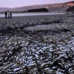 4-tons-sardines-beach-chile