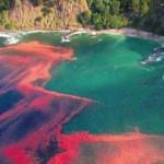 chilen-red-tide