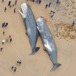 german-whale-death