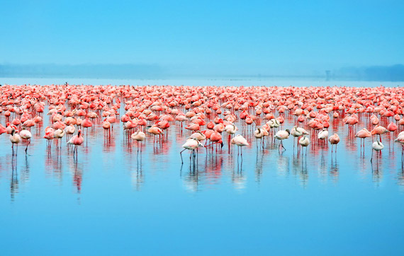 lake-nakuru-blue