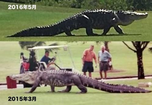 alligater-2015-2016