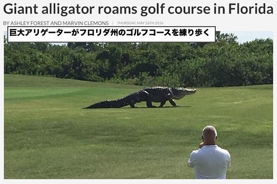 monster-alligater-0526