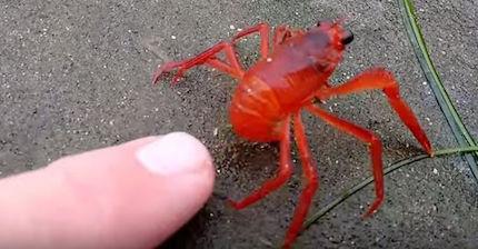 tuna_crab-2