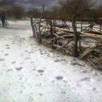 zim-snow2