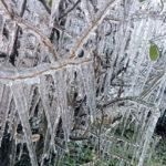 """SAO JOAQUIM /SC 09-06-2016 METROPOLE FRIO ARVORE CONGELADA Marcando a menor temperatura do ano a cidade de S""""o Joaquim registrou a mÌnima de -4.5∞C durante o amanhecer gÈlido desta ˙ltima quinta-feira (09) deixando a paisagem coberta por uma espessa camada de geada em todos os campos de baixadas do municÌpio. Na praÁa central um lago congelou com uma tambÈm espessa camada de gelo. AlÈm do frio, a forte massa de ar frio proporcionou um cen·rio deslumbrante com o congelamento das ·rvores da PraÁa Cez·rio Amarante que atraiu a atenÁ""""o de muitos turista. FOTO SAO JOAQUIM ON LINE"""