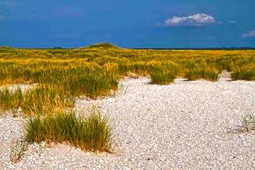 norderoog-sand