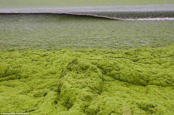 china-algae-2016a