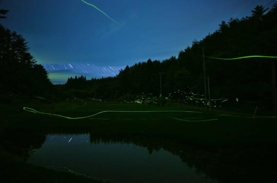 hotaru-lights