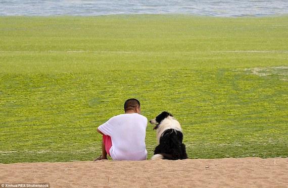 man-dog-algae