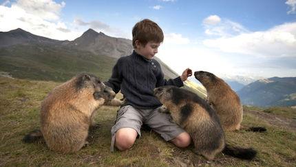 marmot-contact