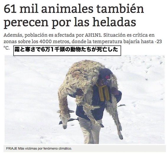 peru-cold-61000-animals-dead