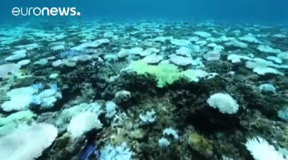 bleaching-coral-japan1