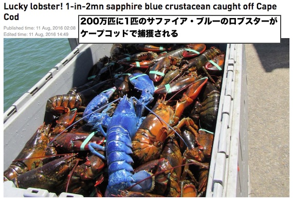 blue-lobster-01