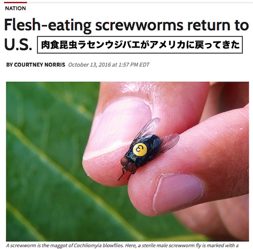 screwworm-back-us