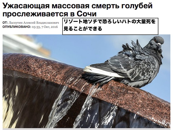 sochi-pigeon-deaths