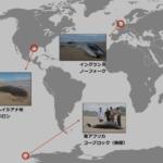 whale-deaths-2016c1