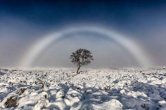 rare-white-rainbow