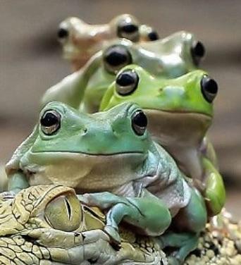 flog-faces