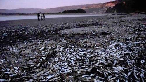 4-tons-sardines-beach-chile