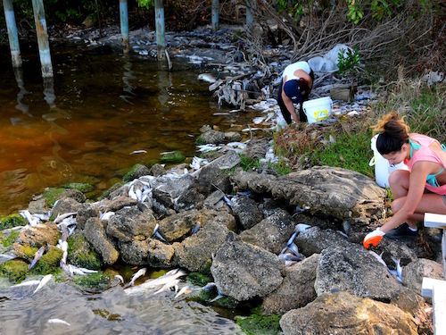 Indian-River-clean1