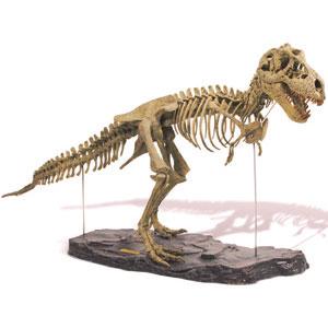 dinosaur-bone-01