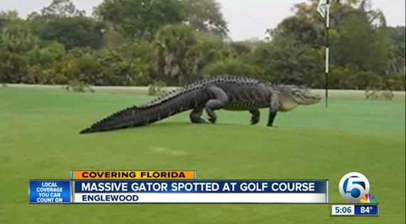 os-giant-golf-course-gator-florida-20150312