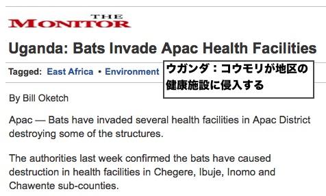 uganda-bats-invade