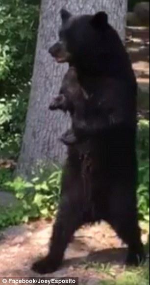 bear-05