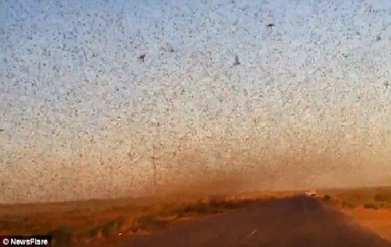 millions-locusts-swarm-russia-1