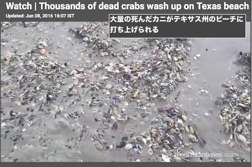 padre-island-crab