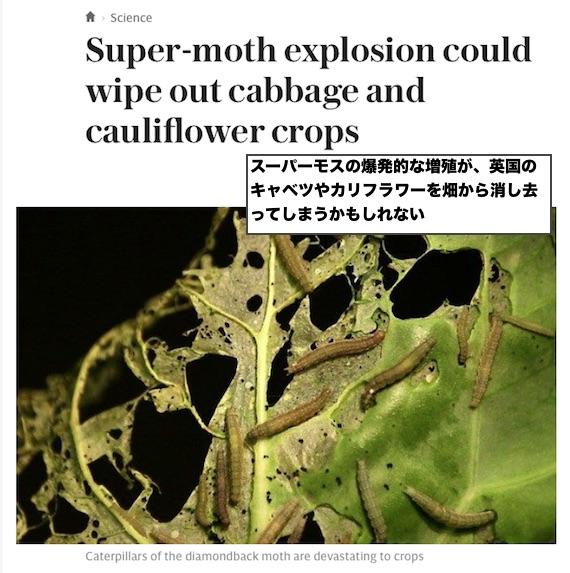 super-moth-uk