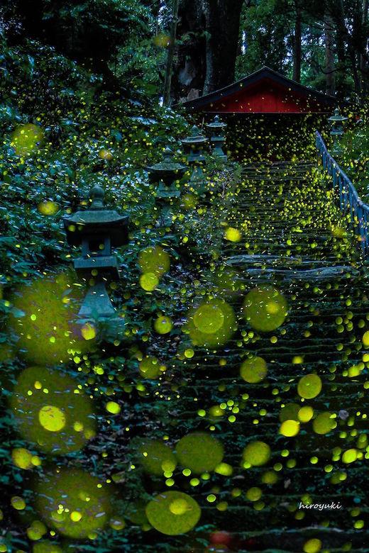 fireflies-kagoshima-01