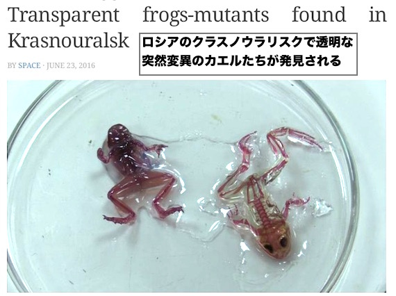 transparent-frogs2