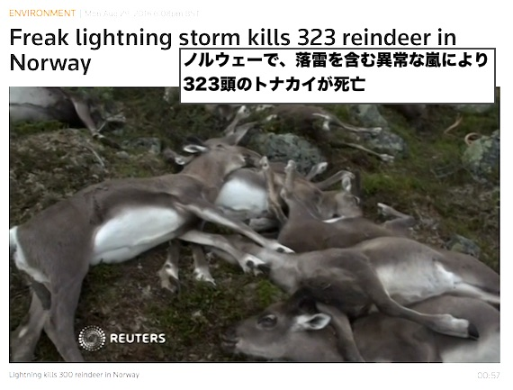 norway-reindeer-deaths