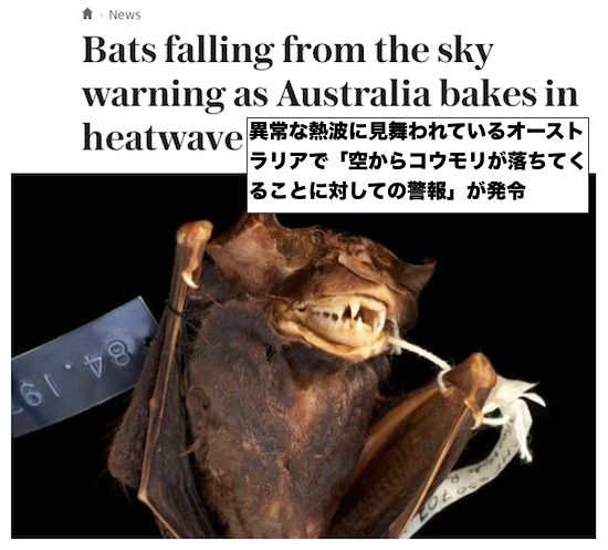 bat-warning-australia
